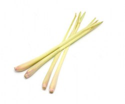 citronella-essential-oil