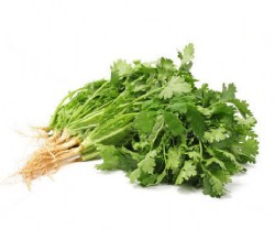coriander-essential-oil