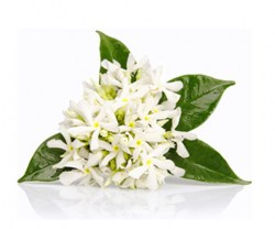 neroli-fl-essential-oil26