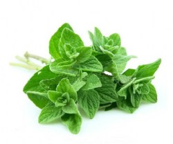 oregano-essential-oil