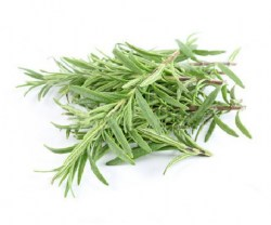 rosemary-essential-oil-