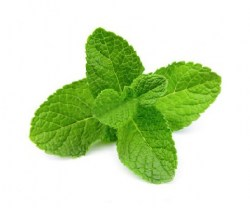 spearmint-essential-oil22